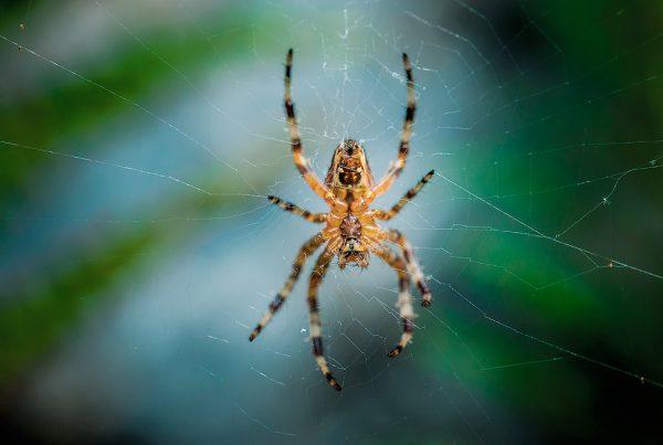Macro araña