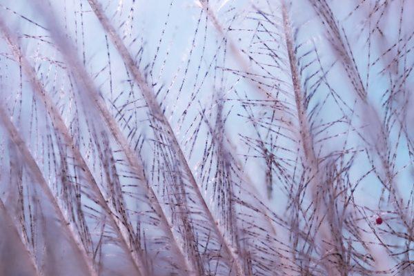 Foto macro de plumas