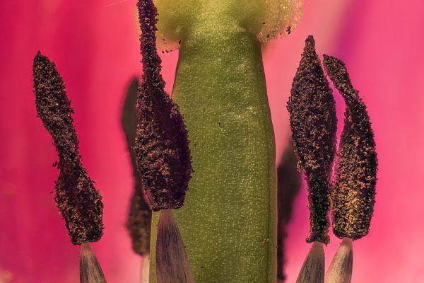 macrofotografía de flores