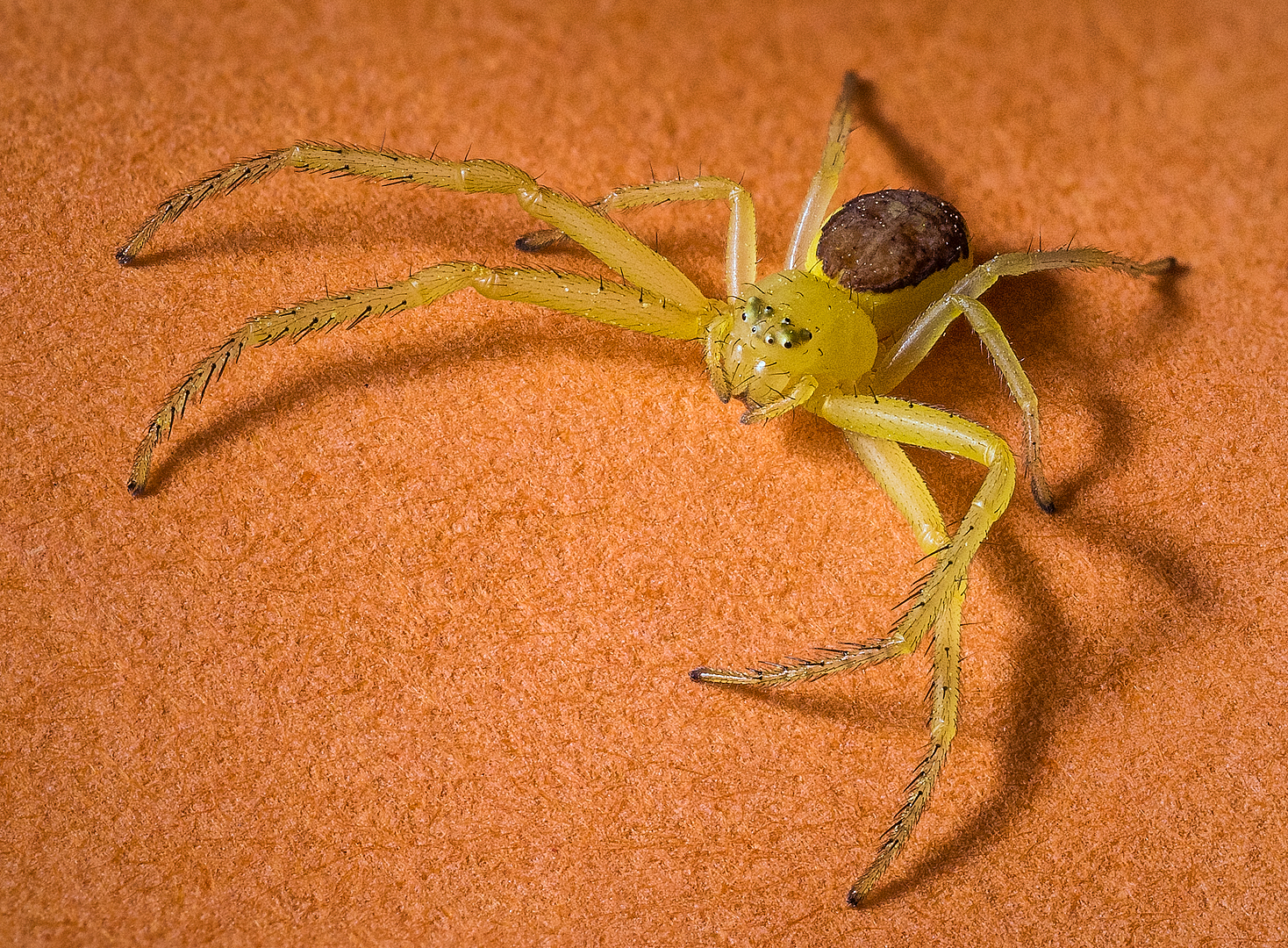 Fotografía de arañas