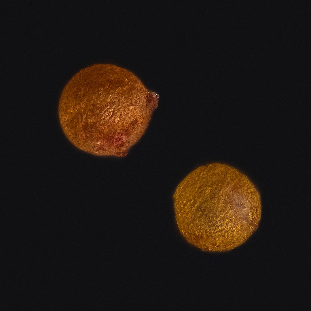 Fotografías de polen
