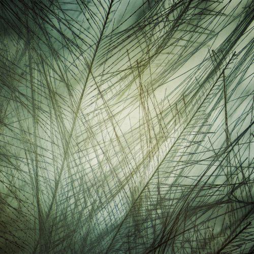 Macrofotografía de una pluma